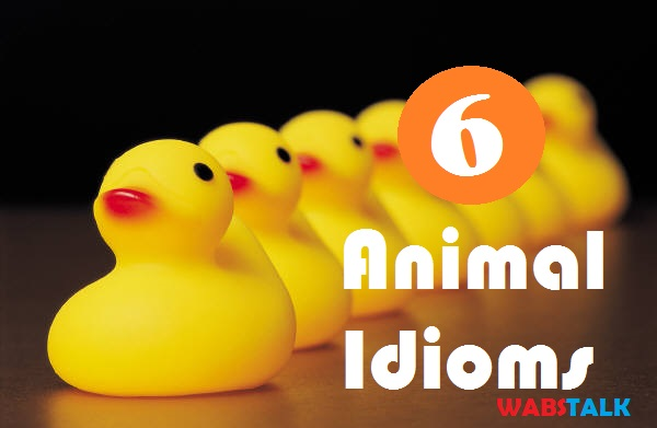 6 Interesting Animal Idioms Their Meanings Examples Wabs Talk